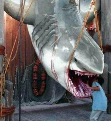 zagląda rekinowi do pyska