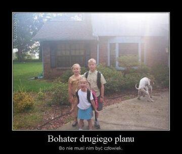 Psy na drugim planie