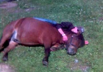 Śpi z koniem