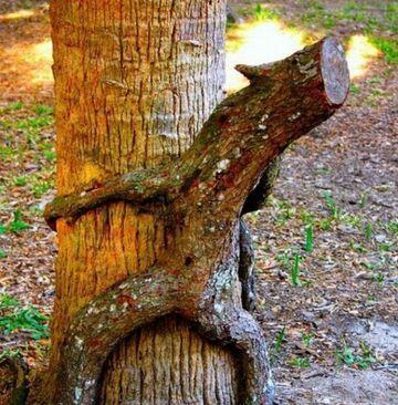Sex drzewo