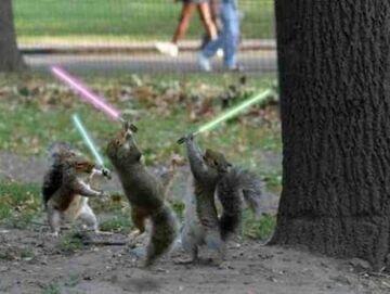 Wiewiórki i Świetlne Miecze