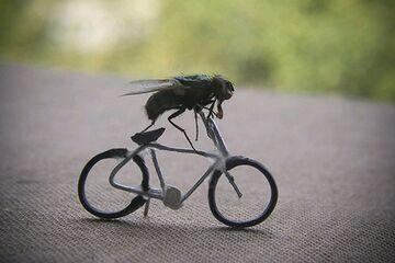 Mucha na rowerze