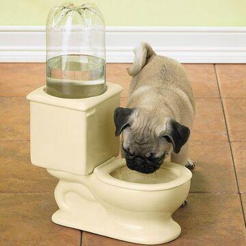 Miska z wodą dla psa