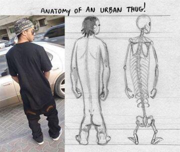 Anatomia skejta