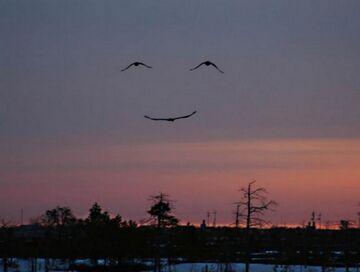 Ptaki z uśmiechem