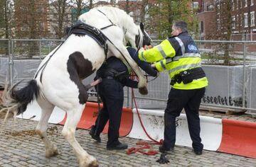 Zły dzień w pracy Policjanta