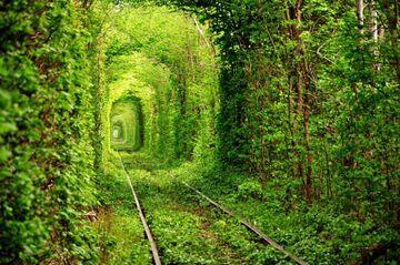 Tunel przez las