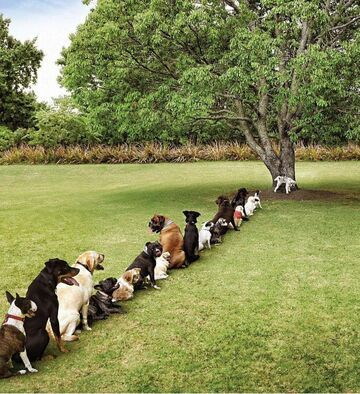 Stop wylesianiu!