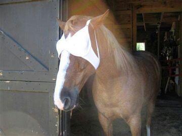 Koń z biustonoszem