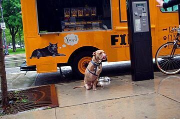 Fast food dla psów?