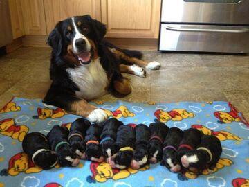 11 szczeniaków!