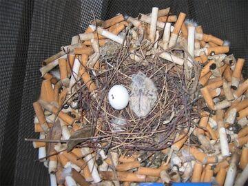 Ptasie gniazdo z petów