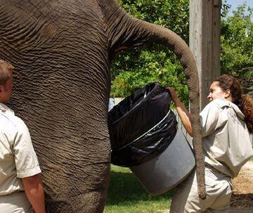 Brudna robota, toaleta słonia