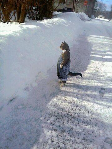 Kot w ogrodniczkach