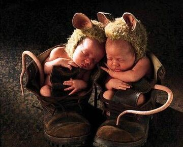 myszki śpią w butach