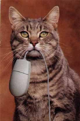 złapał mysz