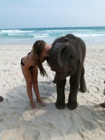 Słonik na plaży