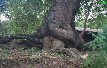 Takie tam, drzewo w lesie :]
