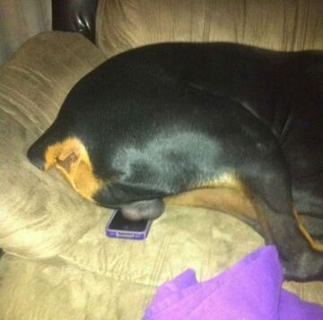 Widział ktoś mój telefon?