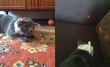 Jak zająć kota na cały dzień