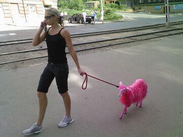 Z różową kozą na smyczy