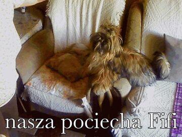 Fifulka