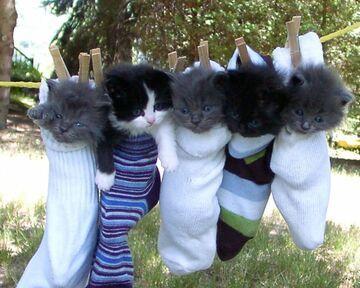 Wyprane kociaki
