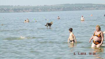 Pies chodzi po wodzie?