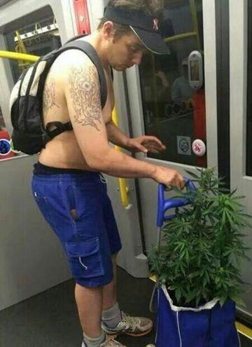 Tymczasem w tramwaju...