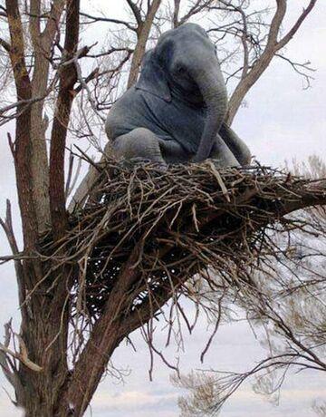 Słoń na drzewie