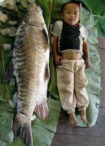 Ryba & Dzieciak