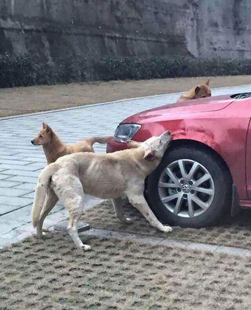 Głodne psy!