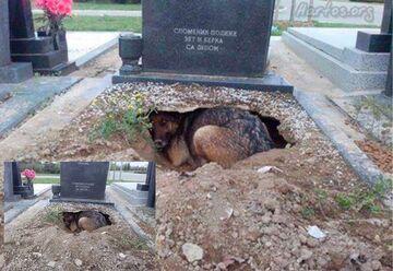 Pies prawdziwy przyjaciel człowieka