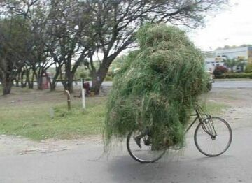 Kopa siana na rowerze