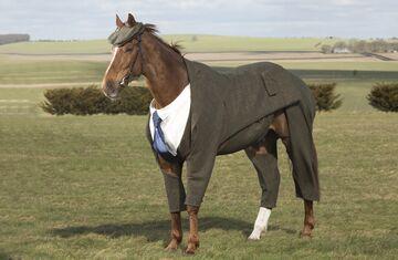 Twój koń jest tak elegancki jak Ty