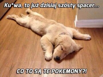 Co to są te pokemony?!
