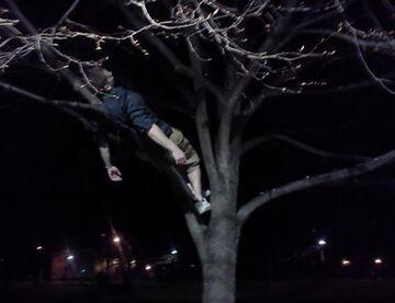 Drzemka na drzewie