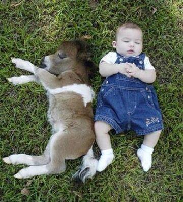 Sen z kucykiem na trawie