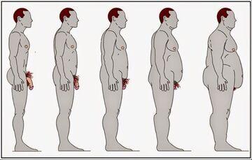 Wpływ otyłości na wielkość penisa