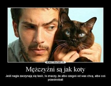 Mężczyźni są jak koty