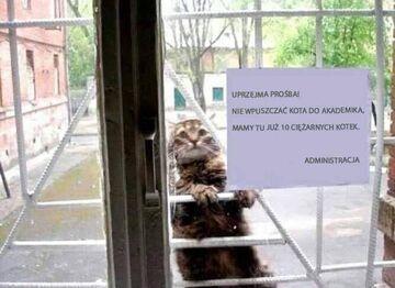 Prosimy nie wpuszczać kota do akademika