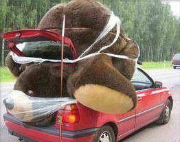 wielki miś na samochodzie