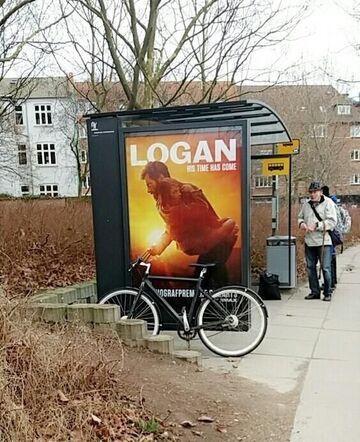 LOGAN na rowerze