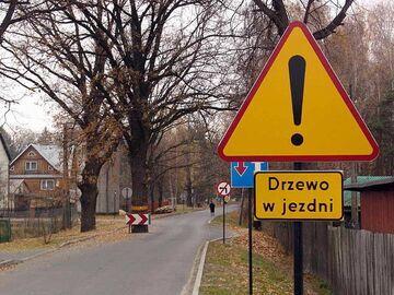 Uwaga! Drzewo w jezdni!