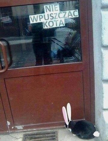 Nie wpuszczać kota