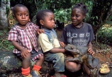 znaleźli żabkę