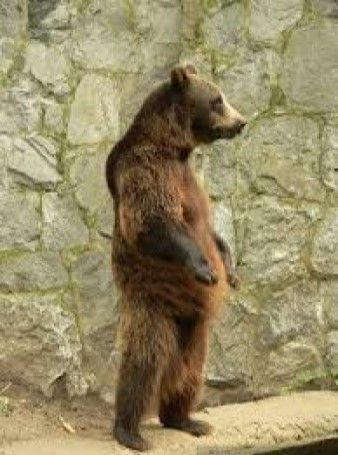Niedźwiedzia przysługa - bajka dla dorosłych [03]