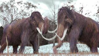 Mamuty będą biegały po Syberii już za 6 lat
