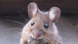 Myszka podejrzane o pożar, który zabił 100 kotów!
