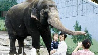 Słoń oskarżony o chuligaństwo